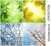 four seasons. a pictures that... | Shutterstock . vector #259537334