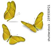 Stock photo three yellow butterfly isolated on white background 259550921