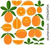 kumquat | Shutterstock .eps vector #259636934