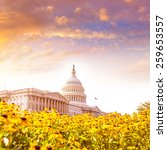 Stock photo capitol building washington dc yellow daisy flowers usa congress turf meadow us 259653557