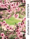 blooming tree branch in spring... | Shutterstock . vector #259653764
