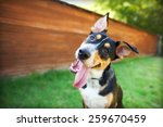 Stock photo happy dog with tongue out and head tilt 259670459