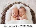 twin newborns in a basket | Shutterstock . vector #259726004