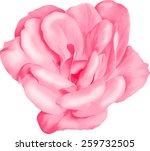 pink camellia rose flower... | Shutterstock .eps vector #259732505