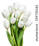 White Tulips On White