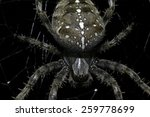 Small photo of Spider waiting in the night for food to come by and get trapped in its web.