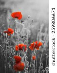 Red Poppy Flowers For...