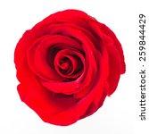 red rose flower isolated on... | Shutterstock . vector #259844429