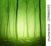 mystical yellow green light in... | Shutterstock . vector #259880555