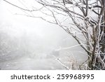 Tree Branches With Snow In The...