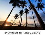 palm trees silhouette at... | Shutterstock . vector #259985141