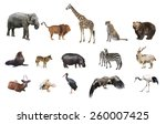 a collage of wild animals | Shutterstock . vector #260007425