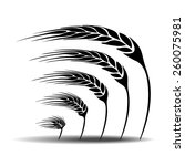 wheat vector | Shutterstock .eps vector #260075981