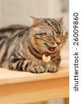 a yawn. | Shutterstock . vector #26009860