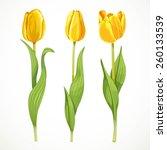 Three Vector Yellow Flowers...