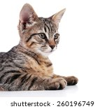 portrait of kitten isolated on... | Shutterstock . vector #260196749
