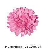 pink chrysanthemum flower... | Shutterstock . vector #260208794