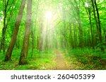 sun beam in a green forest | Shutterstock . vector #260405399