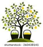 vector two varieties of pear on ... | Shutterstock .eps vector #260438141