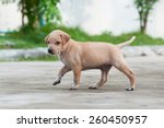 Stock photo puppy dog alone on the street 260450957