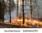 Forest Fire. Using Firebreak...