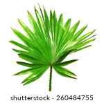 Palm Leaf Isolated On White...