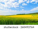 Yellow rapeseed flower field and blue sky, Burgenland, southern Austria - stock photo