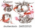 beautiful vector illustration... | Shutterstock .eps vector #260523515