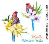 rosella  watercolor  parrot ... | Shutterstock .eps vector #260537285