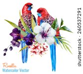 Rosella  Watercolor  Parrot ...