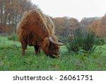 long horn cow grazing | Shutterstock . vector #26061751