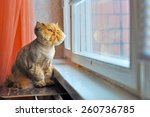 red cat is sitting next to the... | Shutterstock . vector #260736785