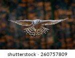 Flying Bird Goshawk With...