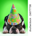 birthday dog - stock photo