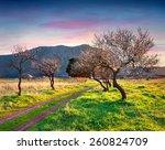 bloosoming almond garden on the ... | Shutterstock . vector #260824709