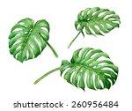 set of watercolor tropical... | Shutterstock . vector #260956484