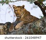 Leopard On The Tree. Tanzania....