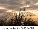 beach grass silhouette against... | Shutterstock . vector #261106601