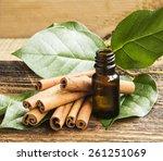 cinnamon essence  cinnamon... | Shutterstock . vector #261251069