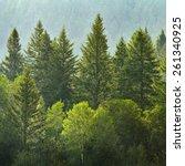 forrest of green pine trees on... | Shutterstock . vector #261340925
