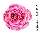 pink rose flower isolated on... | Shutterstock . vector #261353351