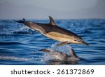 dolphin jump in the ocean.... | Shutterstock . vector #261372869