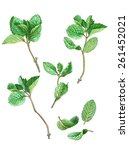 Mint Leaves And Stems Pencil...