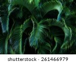 lush tropical foliage. | Shutterstock . vector #261466979