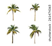 coconut tree on white... | Shutterstock . vector #261474365