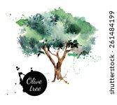 Olive Tree Vector Illustration...