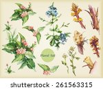 set of watercolor flowers.... | Shutterstock .eps vector #261563315