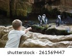 Little Boy Looking At Penguins...