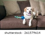 Stock photo dog relaxes on the couch after playing fetch 261579614
