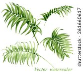 watercolor palm leaves isolated ... | Shutterstock .eps vector #261660617